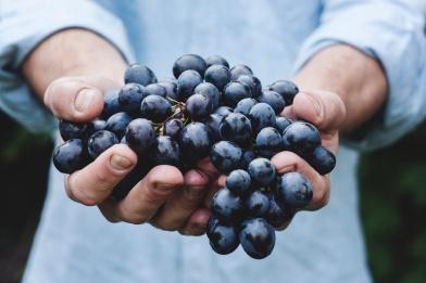 detoxx raisin