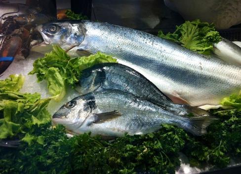fish-1004717_1280