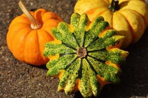 pumpkins-1674112_1920
